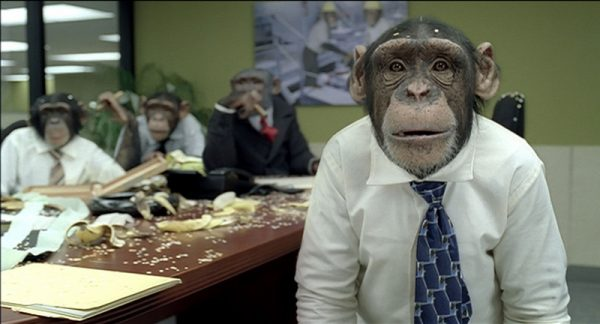 chimp monkey christmas