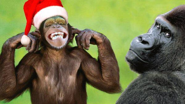 mailchimp monkey christmas
