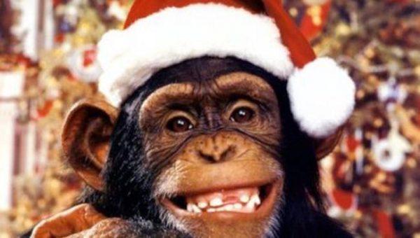 monkey chimp mailchimp christmas